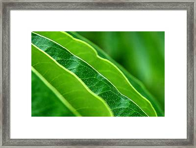 The Hang Of It Framed Print