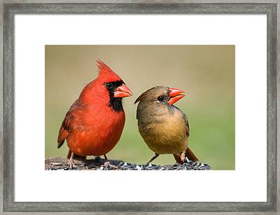 The Happy Couple Framed Print by Bonnie Barry