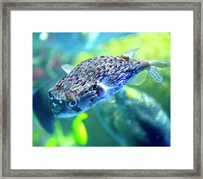 The Happy Puffer Framed Print