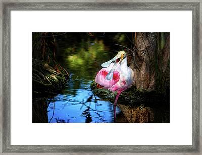 The Happy Spoonbill Framed Print by Mark Andrew Thomas