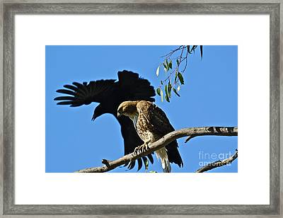 The Harasser Framed Print