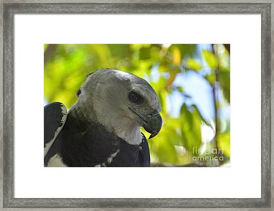 The Harpy Stare Framed Print by Don Columbus