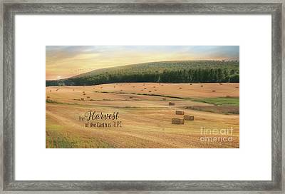The Harvest Is Ripe Framed Print