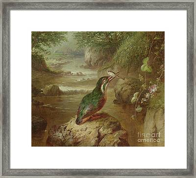 The Haunt Of The Kingfisher Framed Print