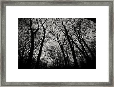The Haunt Of Winter Framed Print by CJ Schmit