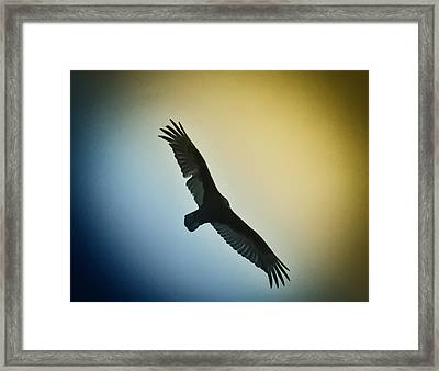 The Hawk Framed Print by Bill Cannon