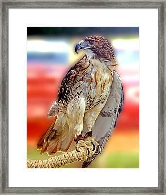 The Hawk Framed Print by Joseph Williams