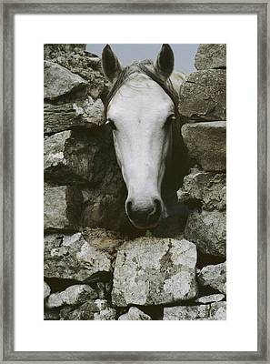 The Head Of A White Framed Print