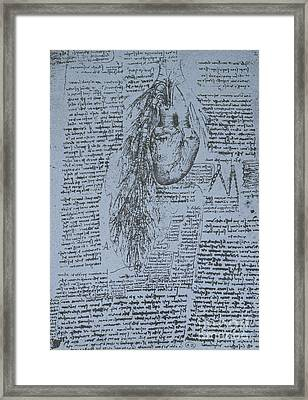 The Heart And The Bronchial Arteries Framed Print