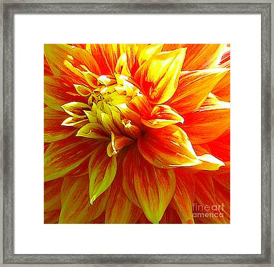 The Heart Of A Dahlia #2 Framed Print