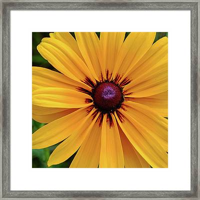 Framed Print featuring the photograph The Heart Of A Flower by Monte Stevens