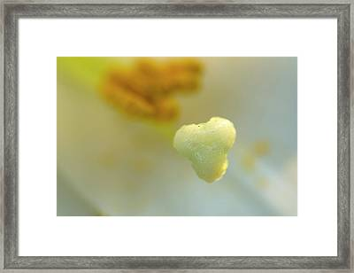 The Heart Of A Lily Framed Print
