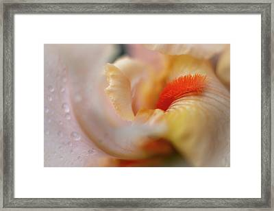 Framed Print featuring the photograph The Heart Of A Yellow Iris by Francisco Gomez