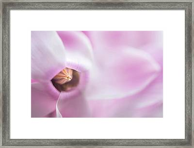 The Heart Of Cyclamen Framed Print