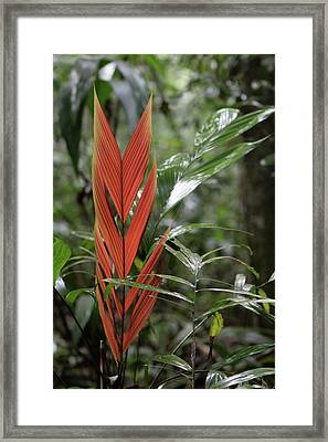 The Heart Of The Amazon Framed Print