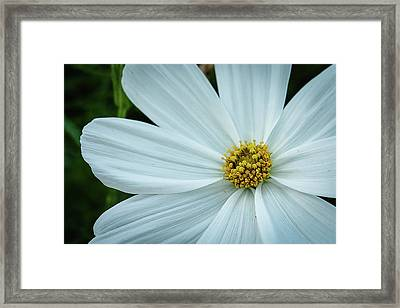Framed Print featuring the photograph The Heart Of The Daisy by Monte Stevens