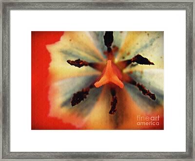 The Heart Of The Matter Framed Print