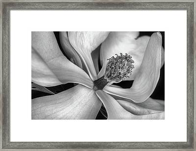 The Heart Of The South Framed Print