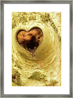 The Heart Of The Tree Framed Print