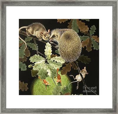 The Hedgehog Framed Print