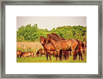 The Herd 2 Framed Print