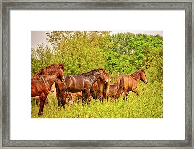 The Herd Framed Print