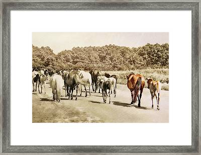 The Herd Framed Print by JAMART Photography