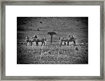 Framed Print featuring the photograph The Herd by Karen Lewis