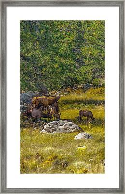 The Herd Keeper Framed Print
