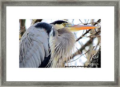 The Heron In Winter  Framed Print