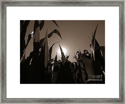 The Hiding Sun - Sepia Framed Print