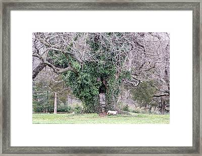 The Hobbit House Framed Print by Jean Haynes