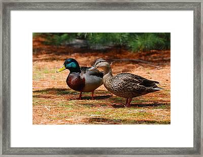 The Honeymooners - Mallard Ducks  Framed Print