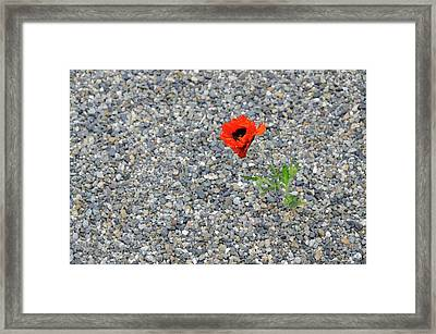 The Hopeful Poppy Framed Print