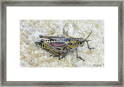 The Hopper Grasshopper Art Framed Print by Reid Callaway