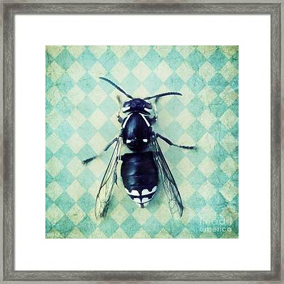 The Hornet Framed Print by Priska Wettstein