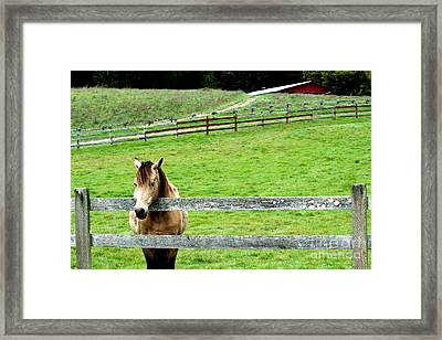 The Horse And The Red Barn . R5913 Framed Print by Wingsdomain Art and Photography
