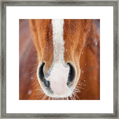 The Horse Collection #2 Framed Print by Tom Cuccio