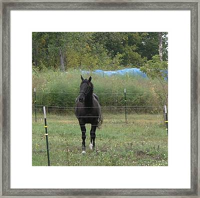 The Horse Framed Print by Janis Beauchamp