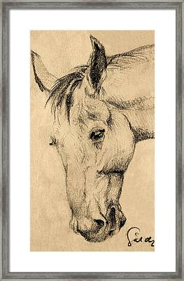 The Horse Portrait Framed Print
