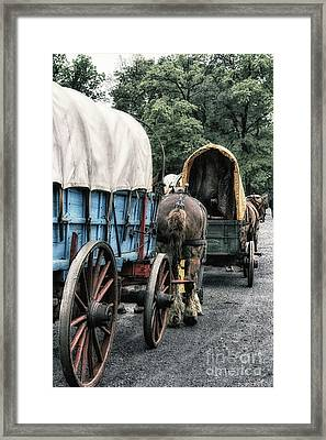 The Horse Train  Framed Print by Steven Digman