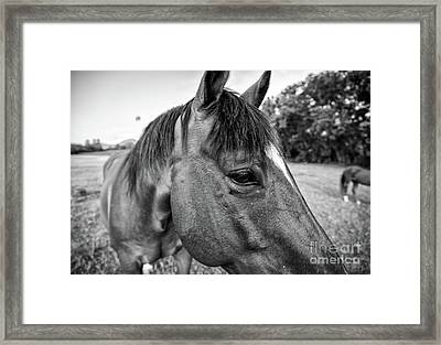 the Horses of Blue Ridge 1 Framed Print