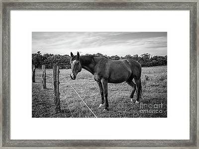 the Horses of Blue Ridge 2 Framed Print