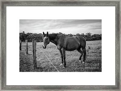 the Horses of Blue Ridge 2 Framed Print