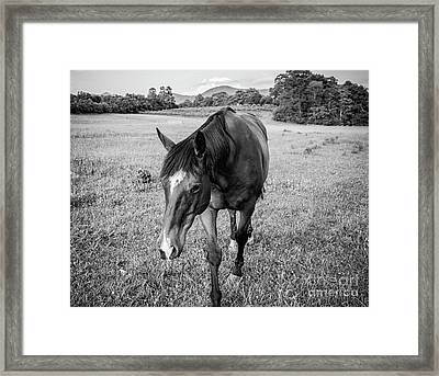 the Horses of Blue Ridge 3 Framed Print