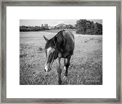 the Horses of Blue Ridge 3 Framed Print