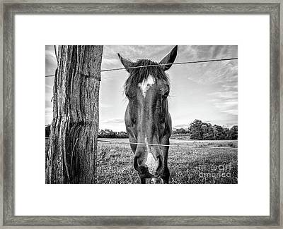 the Horses of Blue Ridge 4 Framed Print