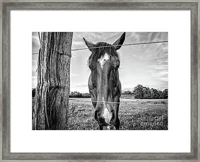 the Horses of Blue Ridge 4 Framed Print