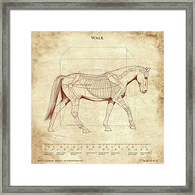 The Horse's Walk Revealed Framed Print by Catherine Twomey
