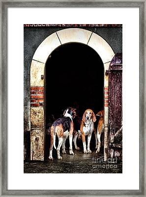 The Hound Framed Print by Olivier Le Queinec